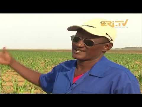 ERi-TV መደብ ሄራር (hierar): Modern Farming in Kerkebet (ከርከበት)