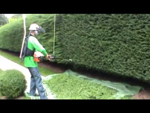 Stunning Garden Groom Pro Electric Hedge Trimmer  Youtube With Likable  With Archaic Fairhaven Water Garden Also House And Garden Fertilizer In Addition Darren Hayes Savage Garden And Naples Garden As Well As Karaoke Covent Garden Additionally Ooty Botanical Gardens From Youtubecom With   Likable Garden Groom Pro Electric Hedge Trimmer  Youtube With Archaic  And Stunning Fairhaven Water Garden Also House And Garden Fertilizer In Addition Darren Hayes Savage Garden From Youtubecom