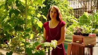 Tips & Tricks to Fall Gardening   The Social Garden