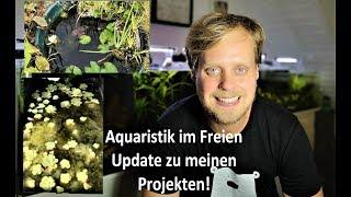 Update Aquaristik im Freien - Kardinäle und Perlhühner