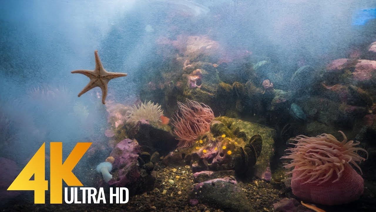 Seattle Aquarium in 4K (Ultra HD) Underwater  World - Short Preview