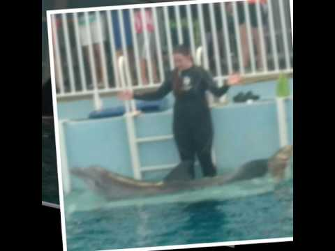 Meeting winter and hope at Clearwater marine aquarium