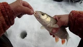 Рыбалка на реке в марте 2021 со льда ловля плотвы и голавля