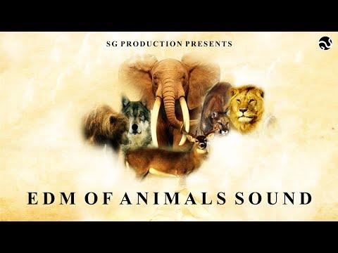 SOUNDCHECK - EDM OF ANIMALS SOUNDS | SG PRODUCTION