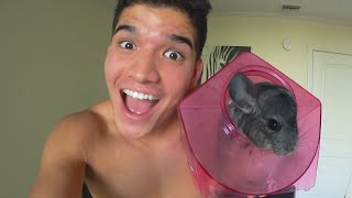 CHiCHi THE CHiNCHiLLA