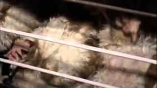 Убийство ради мяса
