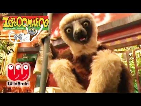 Zoboomafoo   Full Episode: Adventure With Lemur   Animals