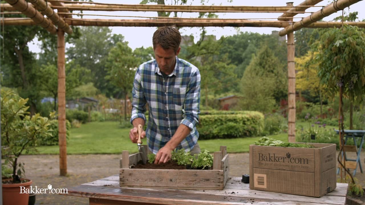 Come realizzare un giardino aromatico youtube - Realizzare un giardino ...