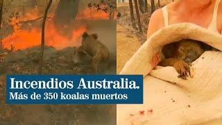 Rescate a un koala en llamas por los incendios de Australia
