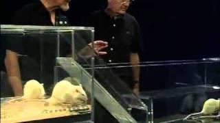 Canal-U :  Faits comme des rats