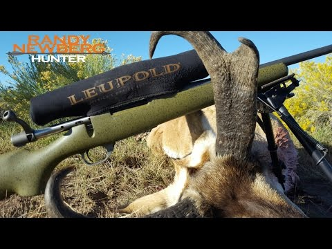 How To Process Antelope In The Field; Hunting With Randy Newberg