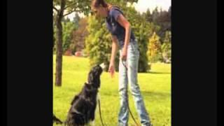 Dog Trainers Victoria Bc Canada