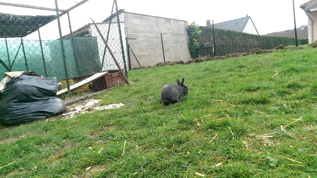 L 39 enclos est finis nouvelles de mes lapins youtube for Abreuvoir lapin fait maison