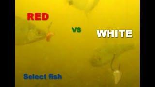 Подводная съемка.Какой опарыш интересней для рыбы КРАСНЫЙ или БЕЛЫЙ.Рыбалка.