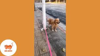 BE CAREFULL - CUTE GOLDEN RETRIEVER AND PUPPIES _ FUNNY CATS AND DOGS VIDEOS COMPILATION #15