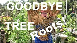 STOP Tree ROOTS in a Garden Where Vegetables Grow in Soil & Woodchips