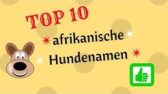10 afrikanische Hundenamen
