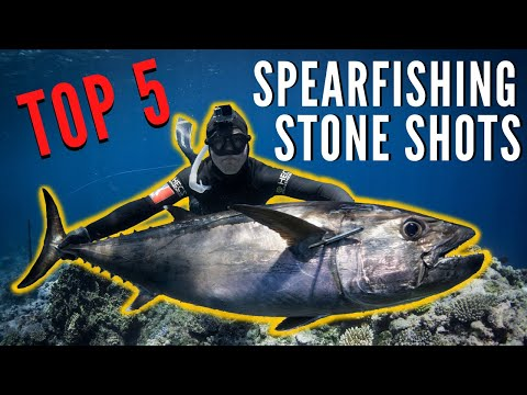Top 5 Spearfishing Stone Shots