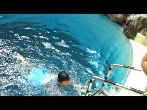 캐리비안베이 다이빙풀 - Diving pool in Caribbean Bay, Korea (2/4)