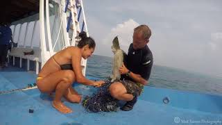 Olive Ridley Turtle Rescue from Ghost Fishing Net, Maldives November 2017