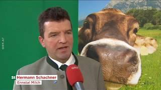 Milchbauern: Massiv unter Druck ORF Steiermark heute