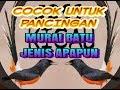 Cocok Untuk Pancingan Murai Batu Jenis Apapun  Mp3 - Mp4 Download