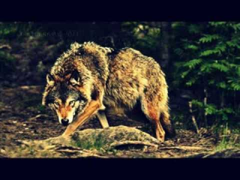 WolfBlood -- A Promise That I Keep