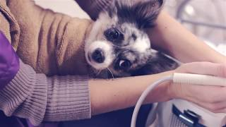 Смотреть видео груминг собак