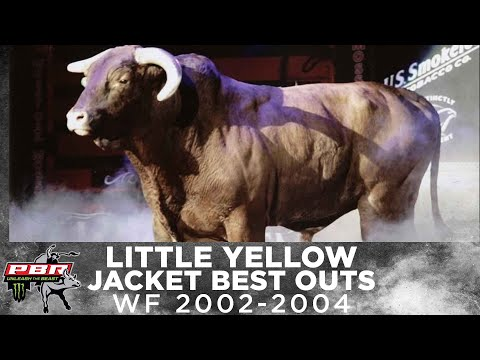 THE FIRST EVER 3X WORLD CHAMPION BULL: Little Yellow Jacket