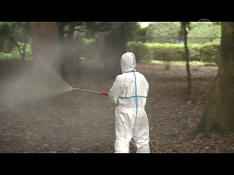 В Японии из-за лихорадки денге закрывают парки (новости)
