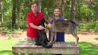STOP puppy biting!!! with German Shepherd Man and Jae