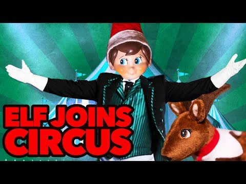 Elf on The Shelf at the Circus 🙊🙉🙈