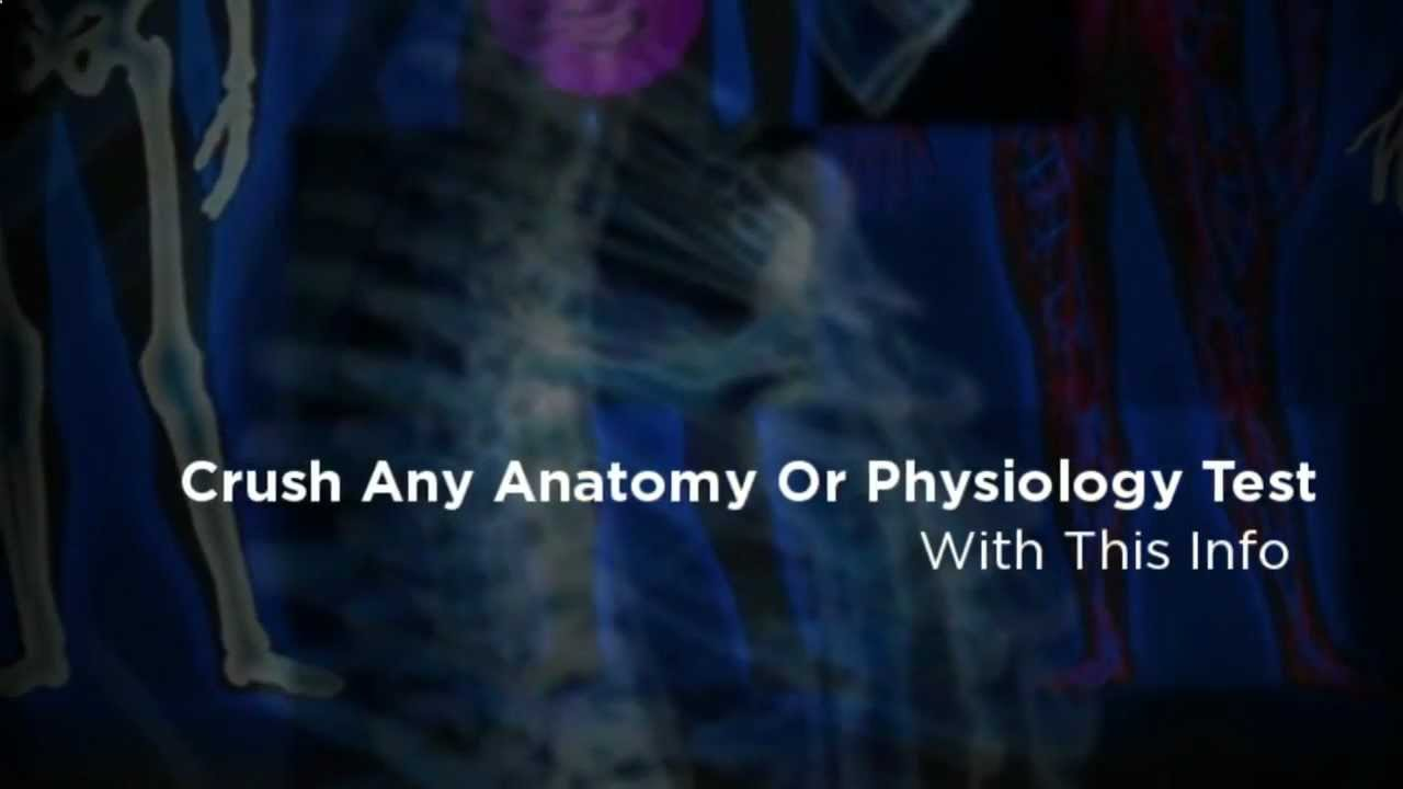 How to be an EMT? Get a solid foundation with this Human Anatomy and ...