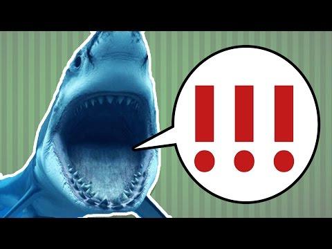 Köpekbalıklarının Midesinden Çıkan 20 Acayip Şey