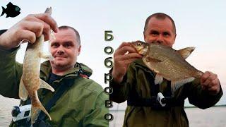 Рыбалка на донки и спиннинг в разгар лета или лещ и щука в Боброво