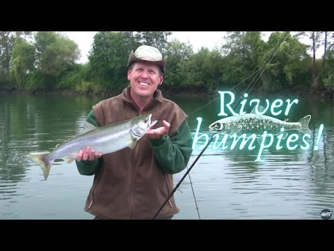 Hoodsport chum salmon funnycat tv for Snohomish river fishing report