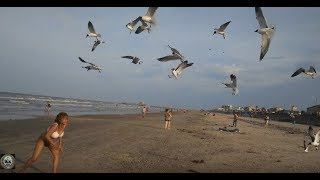 [H]angry Birds Attack Hot Girl On Daytona Beach. She Wanted To Feed Them & Became Meal Instead