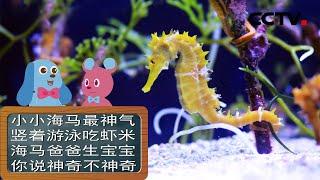 《道哥和摩尔》小海马喜欢吃什么?| CCTV少儿