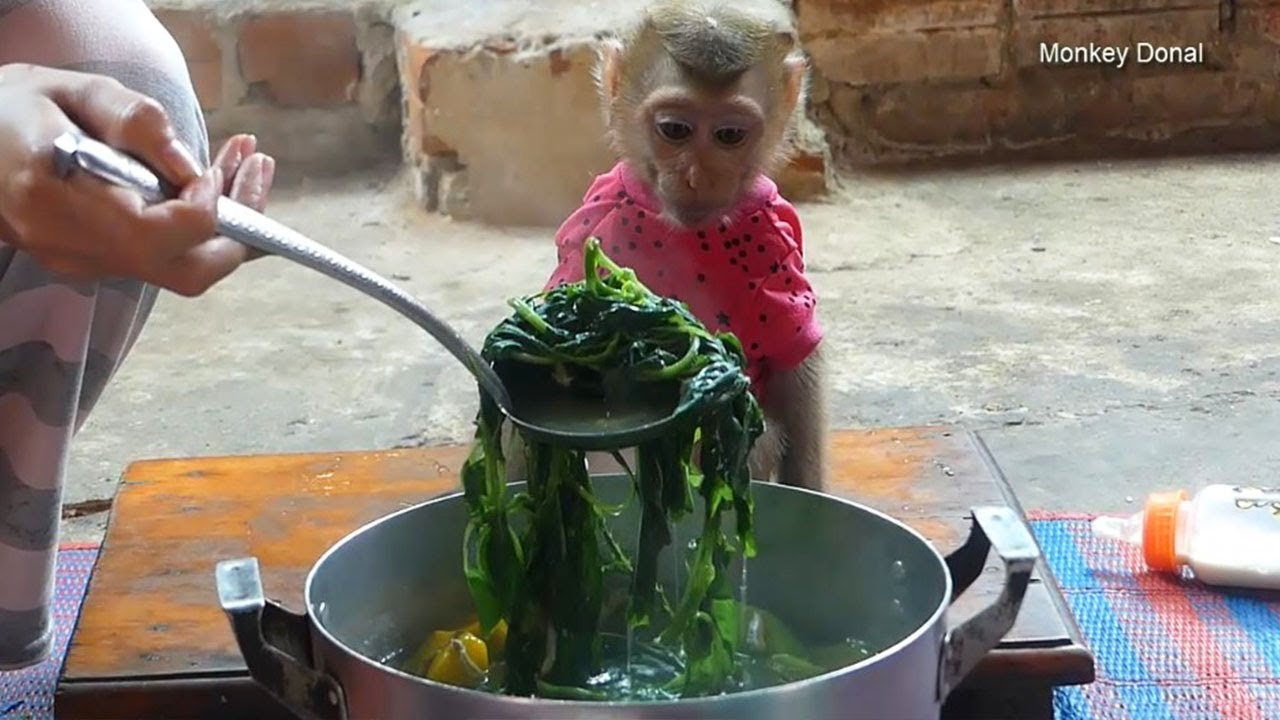 Baby Monkey Donal Sit Waiting Mom Give Him Test Food So Lovely