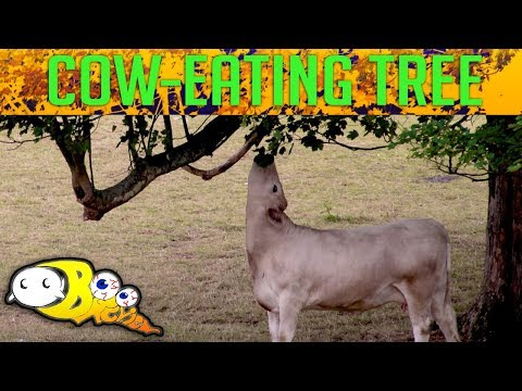 Profiling the Cow Eating Tree | Cryptid Profiles