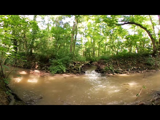 Nature in 360: 5 minutes at the river