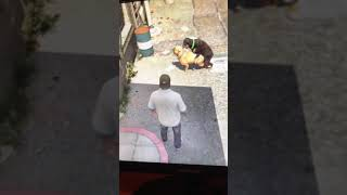 Gta 5 dogs sex 777