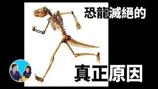 恐龍滅絕的真正原因 | 老高與小茉 Mr & Mrs Gao