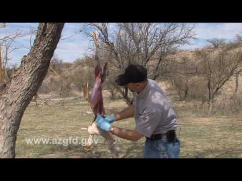 How To Clean A Jackrabbit