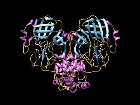 COVID-19/SARS-CoV-2 Main Protease