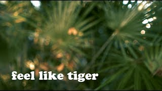 Feel Like Tiger | Kungfu Nerd