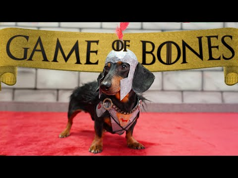 Ep 5. GAME of BONES  'Dachshunds are Coming'