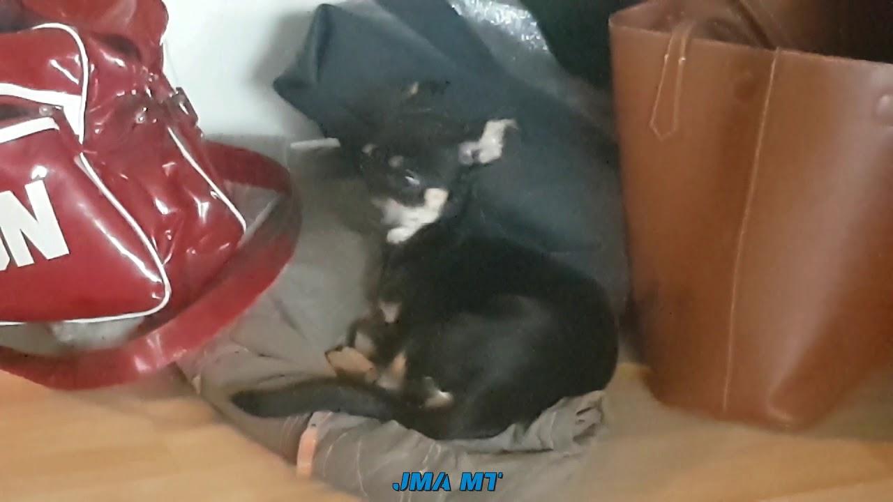 Dog Barking Happy Birthday Youtube