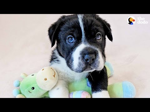 Rescue Pup Doesn't Look Like Any Other Dog - BIGHEAD | The Dodo