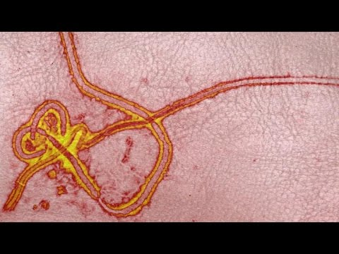 Ebola Outbreak: Epidemic 'Out of Control'